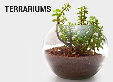 terrariums-mob-17-feb-2019.jpg