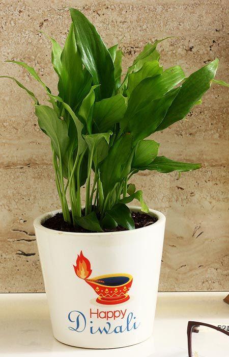 Eco Friendly Diwali Gifts