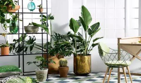 Plants on Rentalo