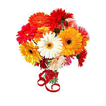 12 Multi Color Gerberas Bouquet: Gift Delivery in Toronto