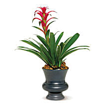 Blooming Bromeliad: Flower Delivery in Edmonton