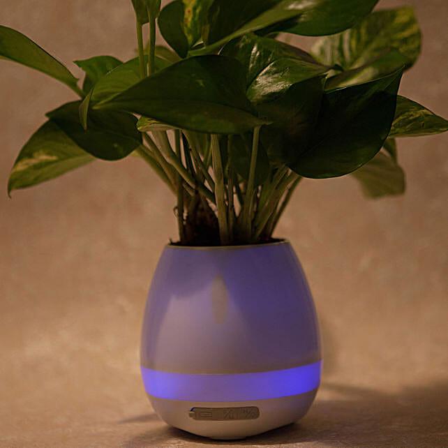 Smart Singing Money Plant