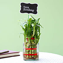 2 Layer Bamboo Plant For Happy Birthday: Send Plants to Bhubaneshwar