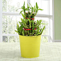 3 layer lucky bamboo Plant: Send Lucky Bamboo to Lucknow