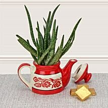 Aloe Vera in Kettle: Send Plants for Him