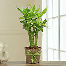 Bamboo Plant Decor: Valentines Day Lucky Bamboo