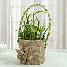 Bamboo Plant In Style: Good Luck Plants - Friendship Day