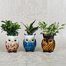 Beautiful Owl Shaped Decorative Pots with Plants: