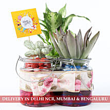 Birthday Special Exotic Plants Combo in Glass Jars: Plants for birthday