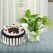 Black Forest Cake With Money Plant: Gifts Bhai Dooj for Kids