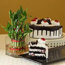 Blackforest Cake N Two Layer Bamboo Plant: Plants for House Warming