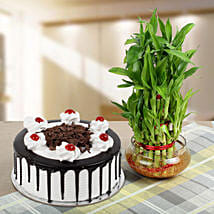 Blackforest Cake With Three Layer Bamboo Plant: Diwali Gifts for Husband