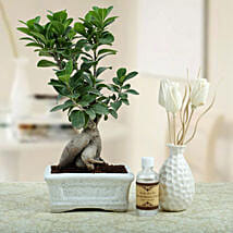 Bonsai N Oil Diffuser: Send Plants for House Warming