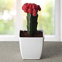 Bring Your Moon Cactus Plant: Flower Plant