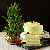 Butterscotch Cake With Three Layer Bamboo Plant: Cake Delivery in Jalna