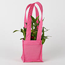 Carry Lucky Bamboo In Style: Send Lucky Bamboo for Rakhi