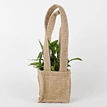 Carry Lucky Bamboo Plant Around: Send Lucky Bamboo for Teachers Day
