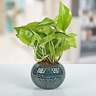 Ceramic Vase Money Plant: Cactuses & Succulents