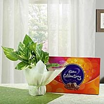 Chocolate N Money Plant Combo: Gift Hampers Ghaziabad