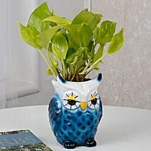 Cool Blue Owl Golden Money Plant: Money Tree