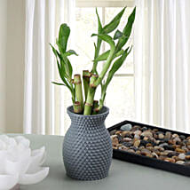 Energizing Bamboo Plant: Send Plants to Ghaziabad