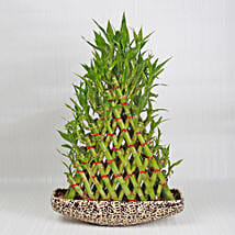Exotic 8 Layer Lucky Pyramid Bamboo Plant: Send Plants to Jaipur
