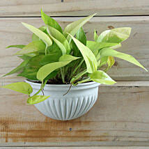 Exotic Money Plant: Karva Gifts for Mother in Law
