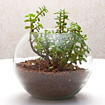 Fantastic Jade Terrarium: Send Plants to Chennai