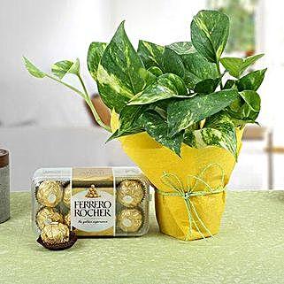 Ferrero Rocher N Money Plant: Good Luck Plants