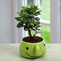 Ficus Dwarf In Smiley Vase: Air Purifying Plants