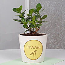 Ficus Dwarf Plant For Mom: Chennai Mother's Day gifts