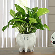 Freshen Up Money Plant: Gifts for Clients