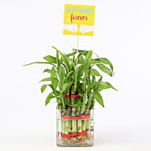 Friends Forever Two Layer Bamboo Plant: Good Luck Plants - Friendship Day