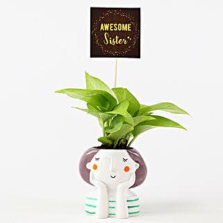 Golden Money Plant In Resin Pot For Sister: Money Tree