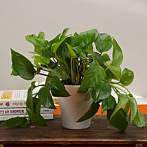 Good Fortune Money Plant: Spiritual Plant