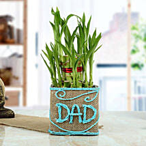 Good Luck Bamboo Plant for Dad: Plants to Bengaluru