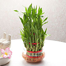 Good Luck Three Layer Bamboo Plant: Home Decor Anniversary Gifts