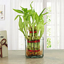 Good Luck Two Layer Bamboo Plant: Anniversary Gifts to Pune