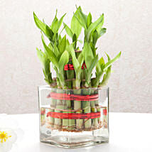 Good Luck Two Layer Bamboo Plant: Womens Day Gifts to Pune