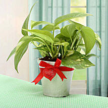 Grab The Luck Money Plant: Valentine Gifts to Vapi