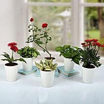 Green is the New Red Plants: Succulents