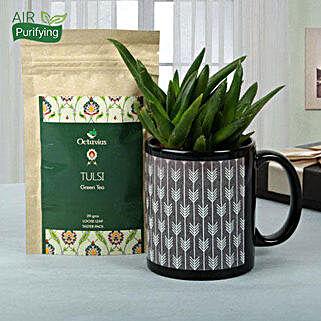 Green Plant Hamper: Herbs & Medicinal Plants