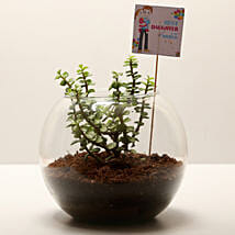 Jade Plant For Daughters' Day: Crassula Plant