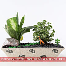 Lively Green Dish Garden: New Arrived Plants