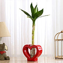 Lotus Bamboo In Red Glass Heart Vase: Bamboo Plants
