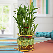 Love For Lucky Bamboo: Plants to Chennai
