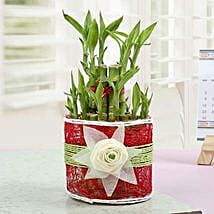 Love with Lucky Bamboo Plant: Good Luck Plants - Friendship Day