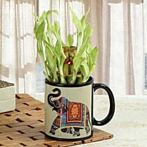 Luck In Mug: Good Luck Plants for Mothers Day