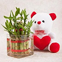 Luck N Cuteness Combo: Plants for anniversary