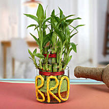Lucky Bamboo For Brother: Gifts for Brothers Day